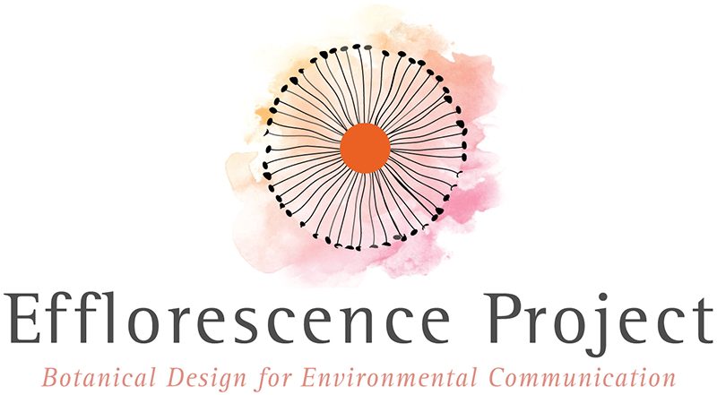 The Efflorescence Project