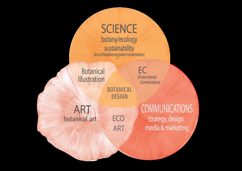 Venn-diagram-(lotus-orange)
